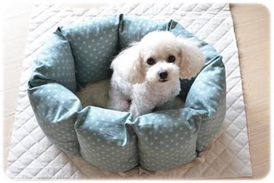 2015.09.20 犬ベット 7.JPG